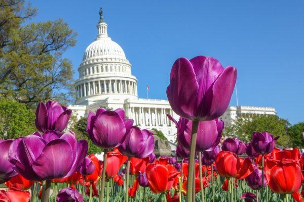 Best Time to Visit Washington DC